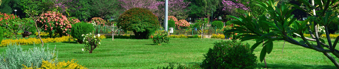 "Bangalore it is also known as the ""Garden City"" for its numerous gardens and parks across the city."